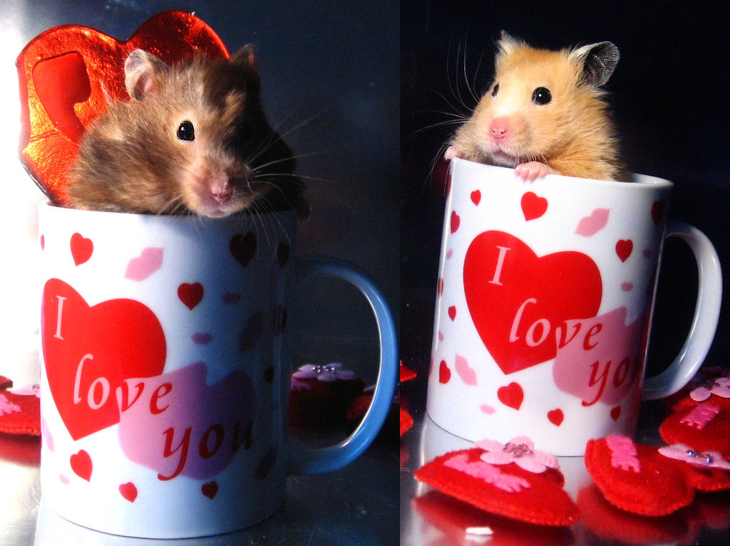 Www.X Hamster