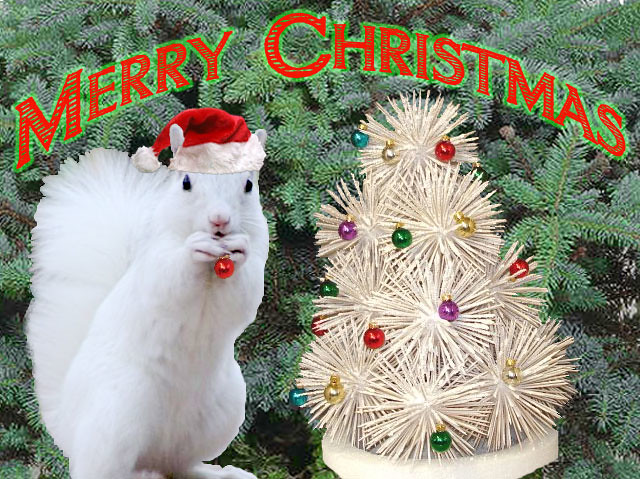 Christmas squirrel | Merry Christmas from the Squirrel Queen ...