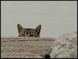 I'm Watching You | by HaSHe