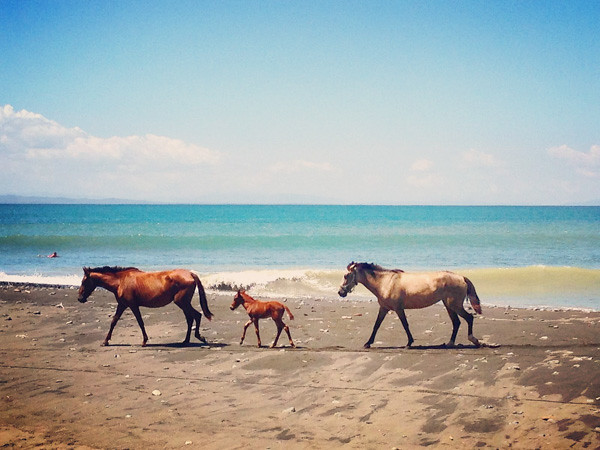 Wild horses on the beach near Pavones Costa Rica