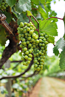 Rkats Grapes at Horton Vineyards | by Courtney | Cook Like a Champion