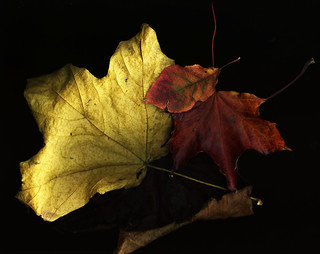 Fall Collection | by Sharon Mollerus