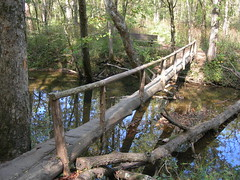 Log_bridge