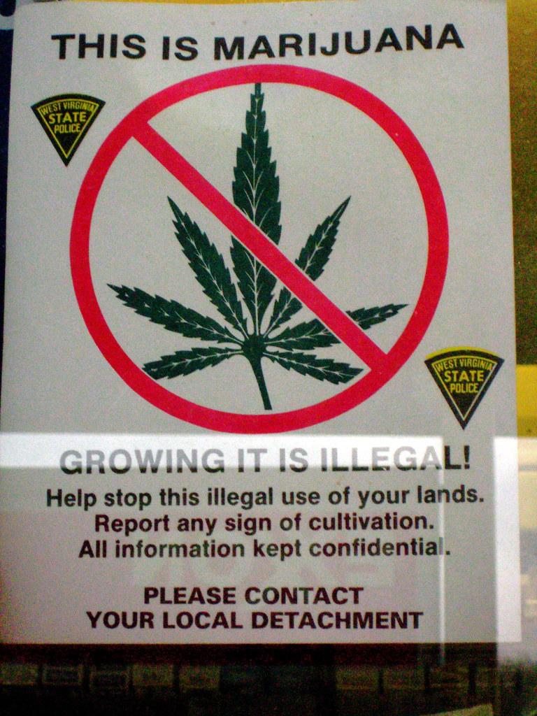 essay on legalization of marijuana
