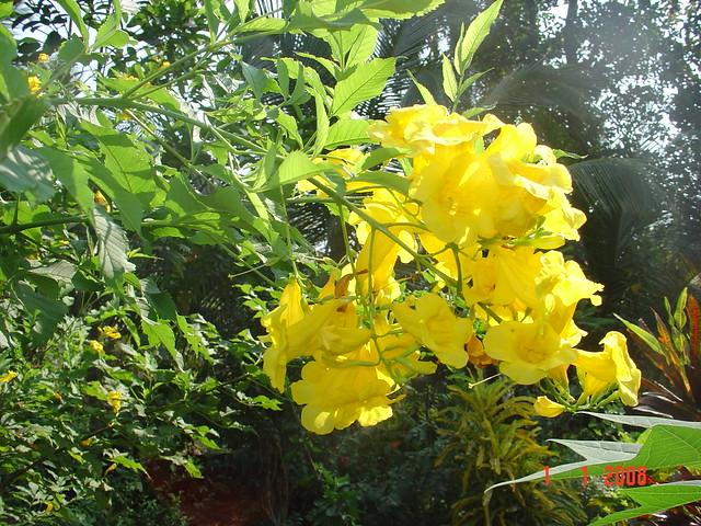 Perennial Food Plants List