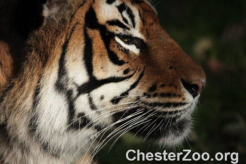how to get to chester zoo from skelmersdale