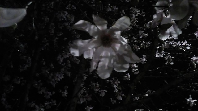 Nocturnal Bloom