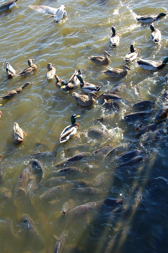Birds and fish pymatuning reservoir oct 2007 2007 for Pymatuning fishing report