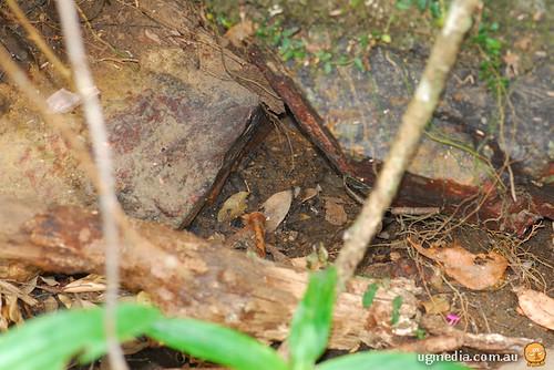 Platypus burrow