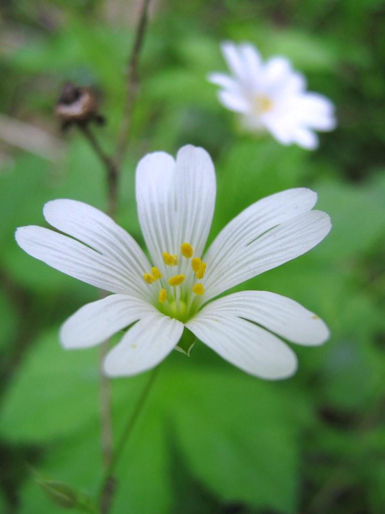 White Woodland Flowers Lotte Worthington Flickr