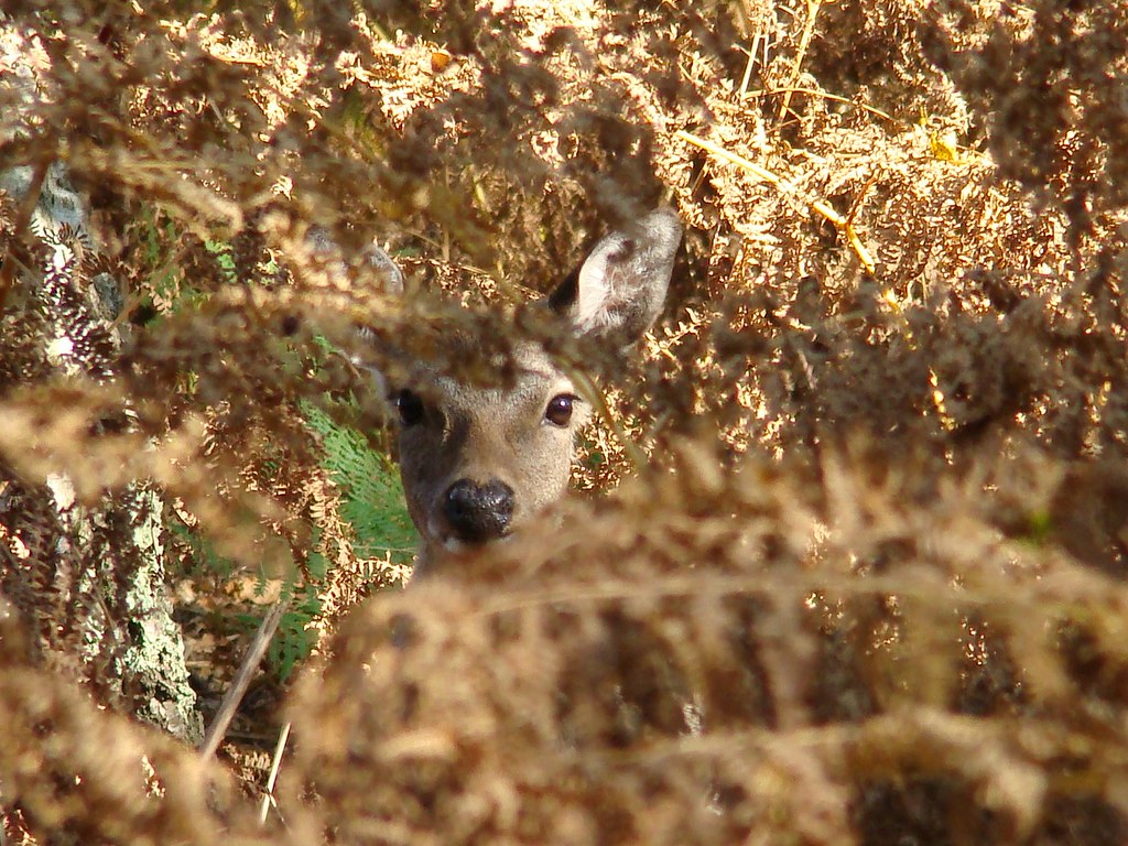 seeking the sika | Can you see her? She was watching me inte