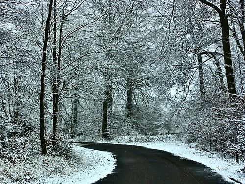 Dreaming of Snow  --  The first few flurries of this Winter fell in the Chiltern Hills. | by algo