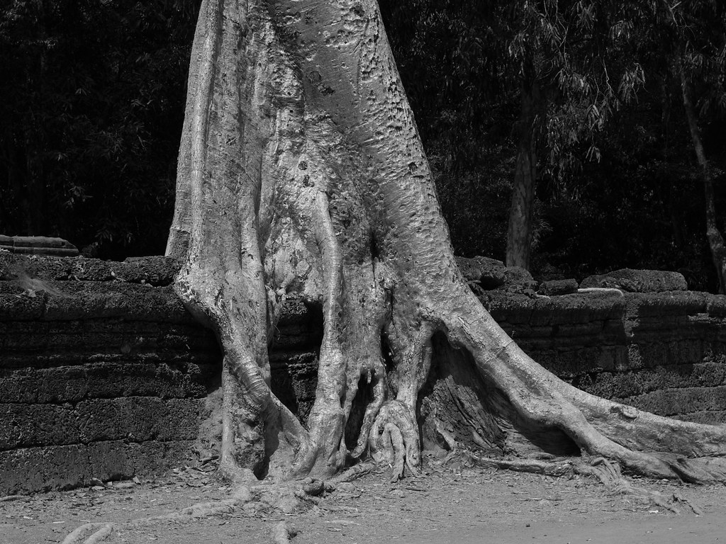 Vagamundos 2005. Camboya. Siam Rep. Ankgor Vat