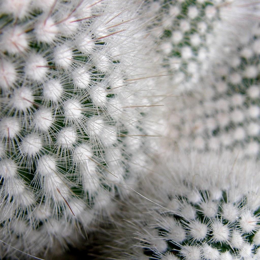 grand cactus d intérieur