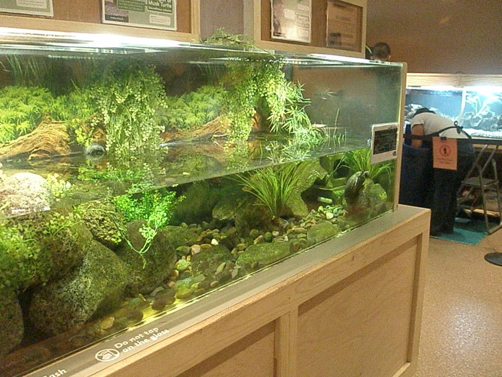 Turtle Tank Anika Malone Flickr