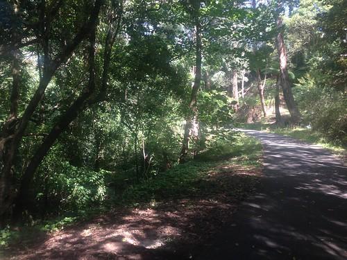 Ringwood-Belgrave Rail Trail, Belgrave