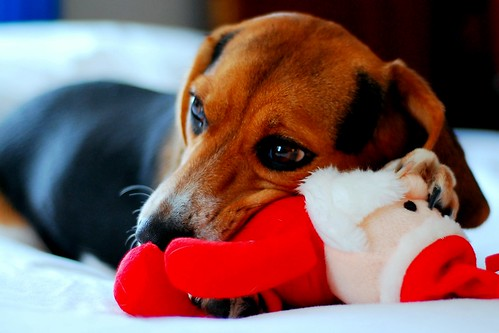 a dog and her santa | by amy_elr