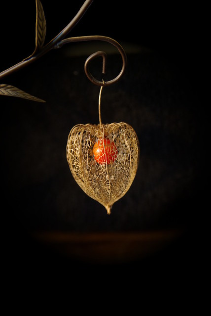 Amour en cage flickr photo sharing - Fruit cage d amour ...