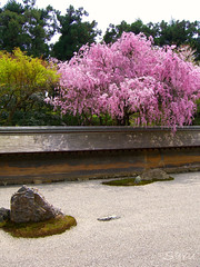 Ryoanji (UNESCO World Heritage site) | by AnotherSaru - Limited mode