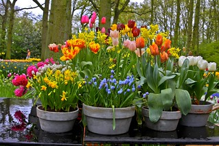 Beautys in de keukenhof.. | by Truus
