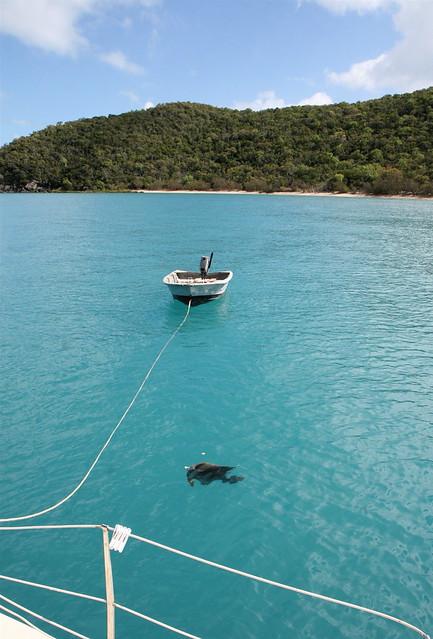 Armit island ominous bread eating bat fish circle the for Circle fishing boat