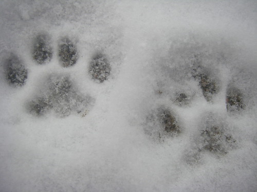 Snow paw | by loli24