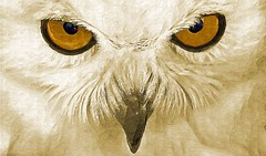 Owl`s Eyes | by artofgold