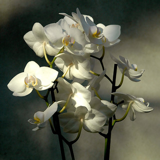 Orchids | by naughton321