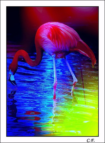 Pretty flamingo number two | by nature1955