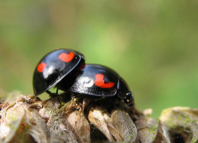 Ladybird lovin' | by nutmeg66