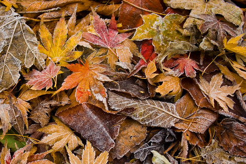 Frozen Autumn | by dirac3000