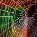 The Spider's Abandoned Web