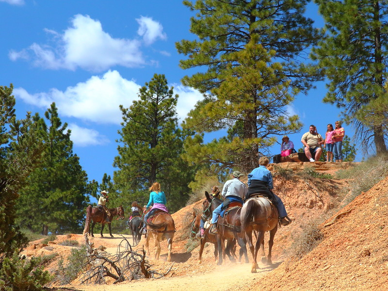 IMG_4985 Mule Ride, Bryce Canyon National Park