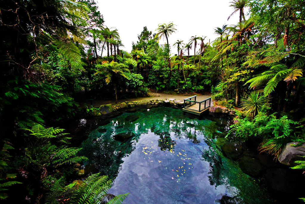 Rotorua Rainbow Springs Pond In New Zealand Aaron