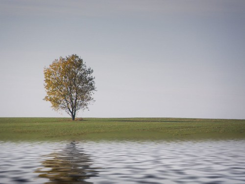 Lone tree with Flood | by Fred Jackson ( Free Tibet )