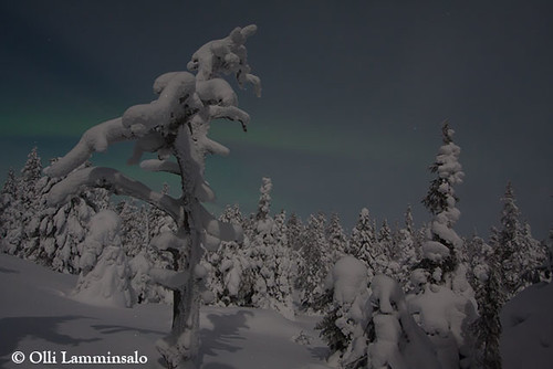 konttainen_fell_in_moonlight__february_kuusamo | by Finnature Bird Photography - Nature Photography