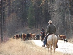 Doug and Erika Fossen on cattle drive on Mt Baldy road | by ralphpalmer