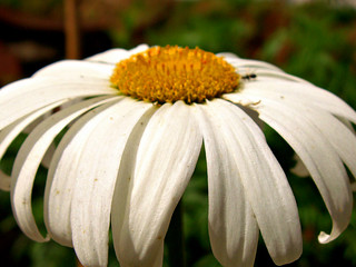 White and yelow.. | by srini_g2003
