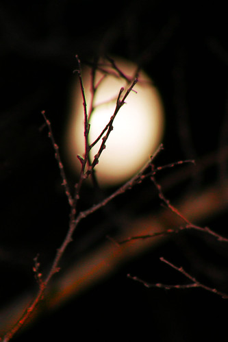 Boiled Egg Moon | by Tim Wiegert