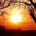 Sunset Silhouette (1)