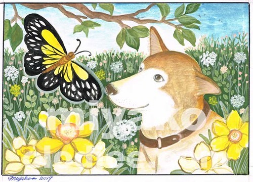 Dog and butterfly with some narcissus
