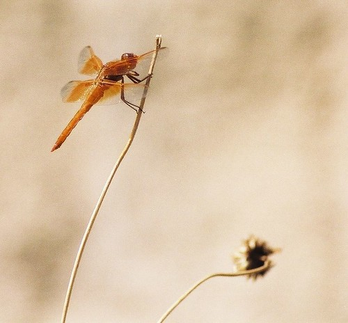 Dragonfly | by monika & manfred