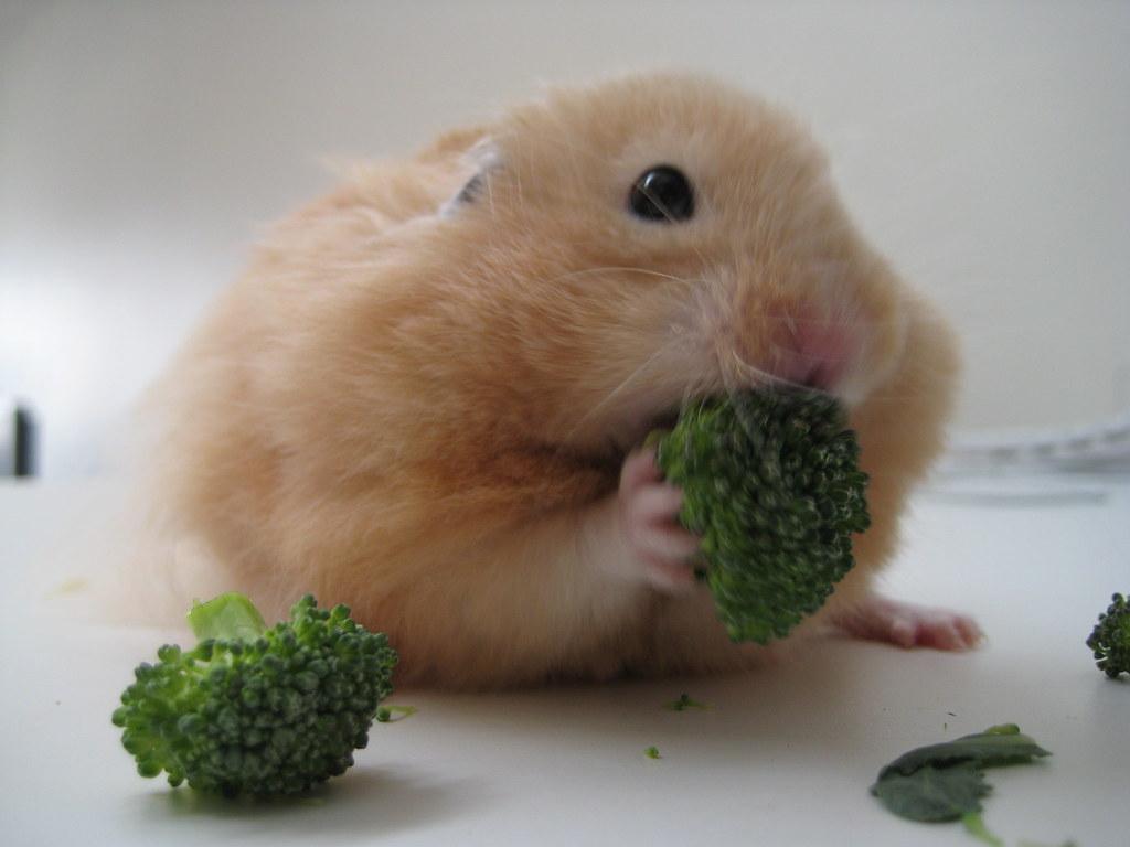 Baby Borscht And Broccoli Carolyn Coles Flickr