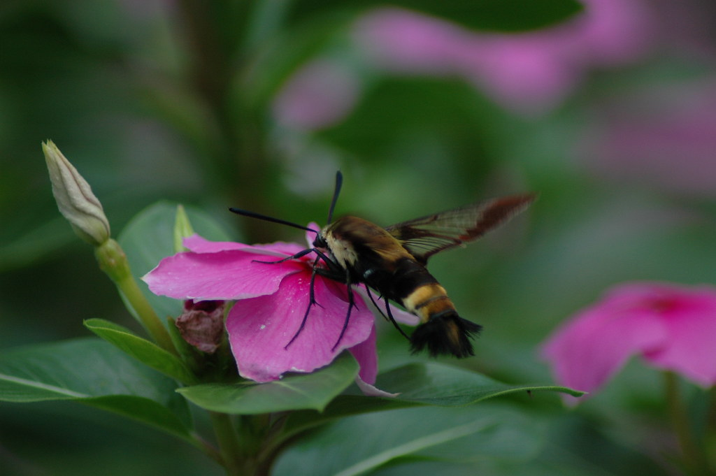how to get rid of bumble bees in my yard