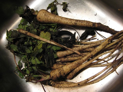 Parsnips in Sink | by spudd