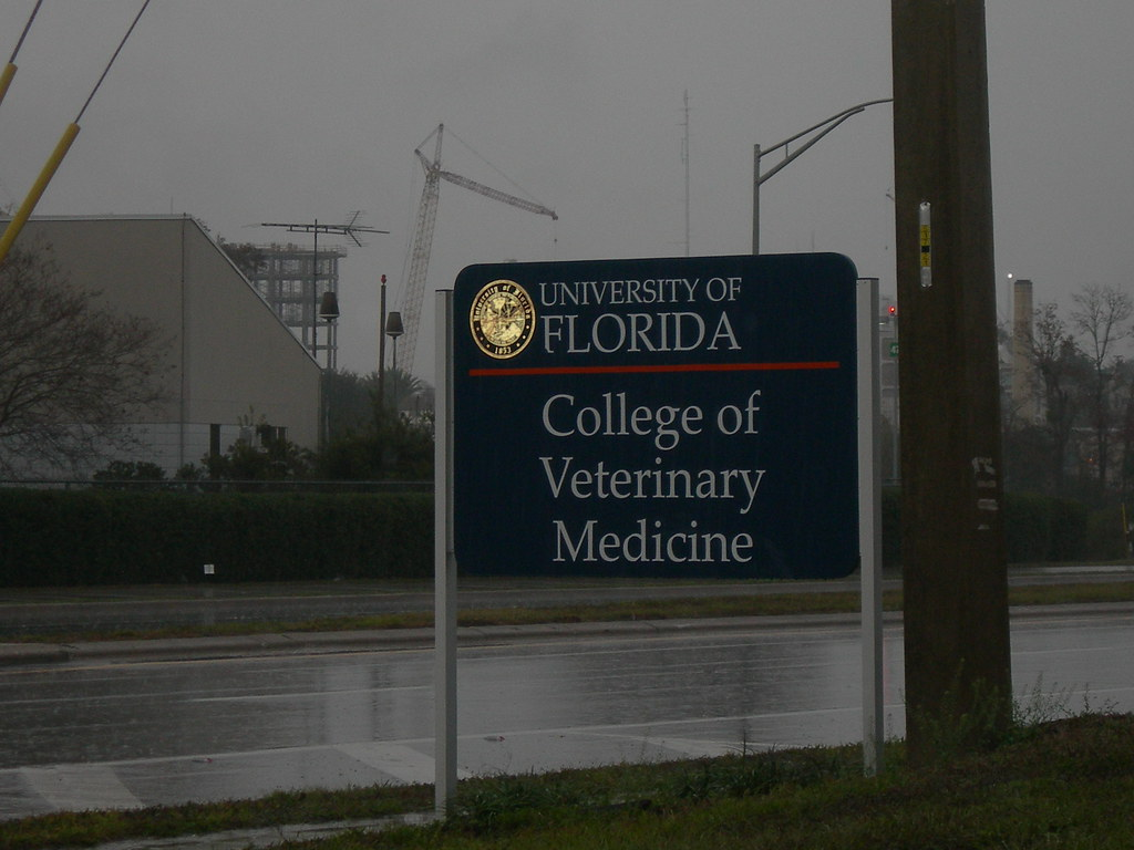 Uf College Of Dentistry Letter Of Intent