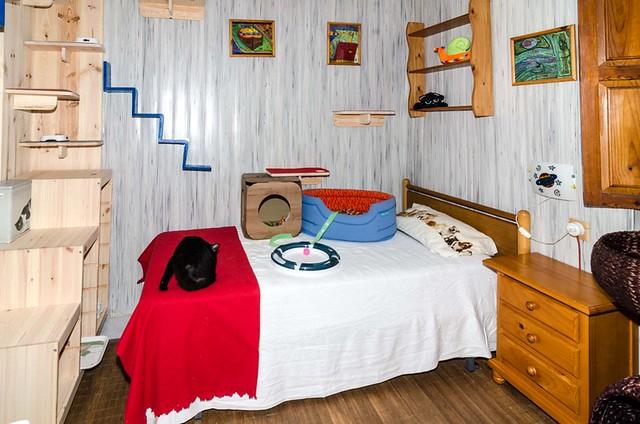 Guardería Felina Mimos 32904877771_632a9653e6_z