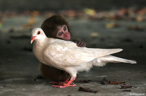 Monkey and Pigeon | by macbros