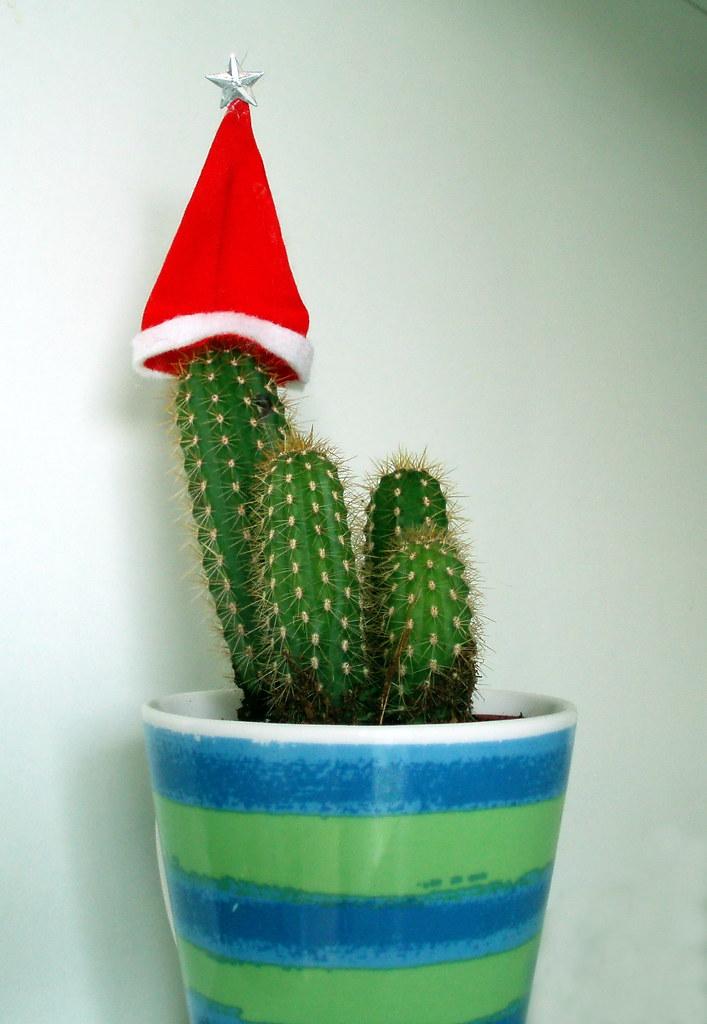 cactus borzicactus by jacilluch cactus borzicactus by jacilluch - Cactus Christmas Decorations