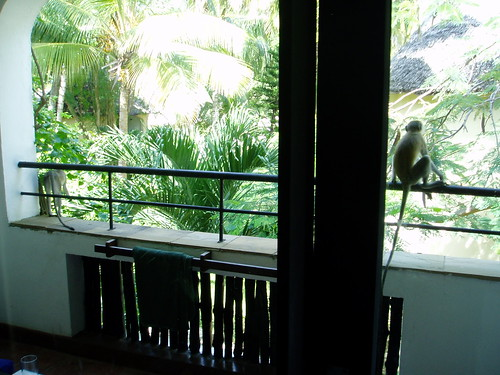Monkeys on our balcony ditzy girl flickr for On our balcony